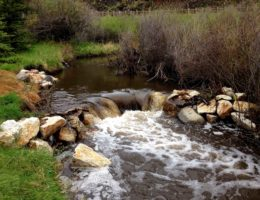 Image for Spring Creek Watershed Restoration