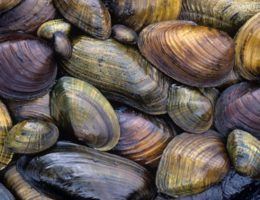 Image for Mussel Data Analysis