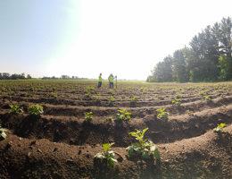"Image for RESPEC Tests ""Farmers Friend,"" New Soil Moisture Sensor"